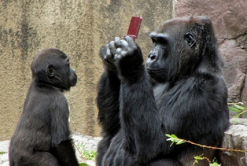 gorilla with nintendo ds