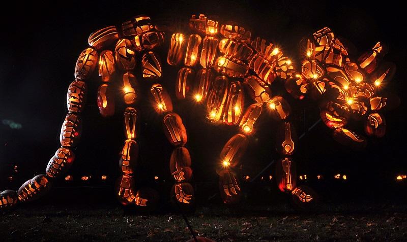 triceratops jack o lantern pumpkins sculpture