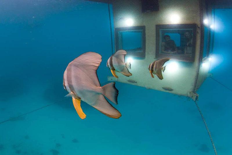 underwater hotel room pemba island tanzania africa (3)