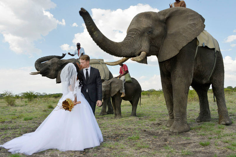 african safari wedding 1 Couple Elopes in Iceland to be Surrounded by Nature