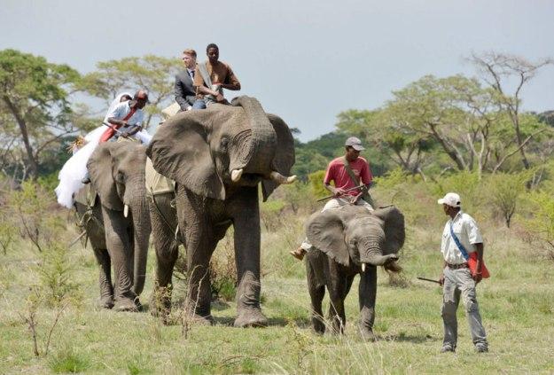 african safari wedding (2)