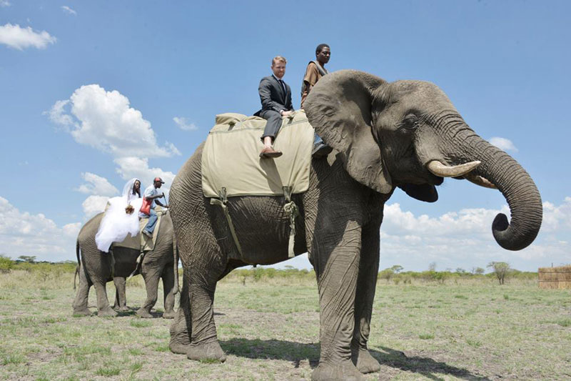 african safari wedding (3)