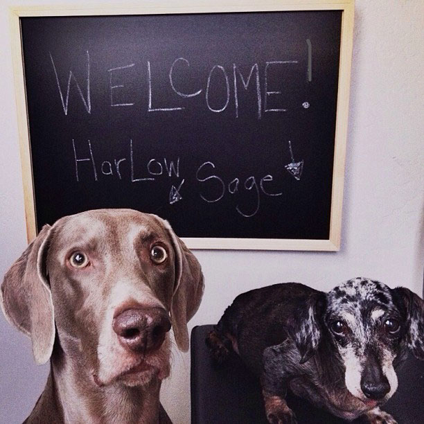 harlow sage and indiana big dog small dog cute instagram (3)