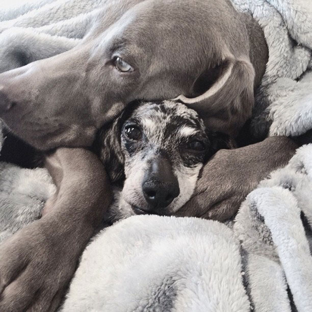 harlow sage and indiana big dog small dog cute instagram (7)