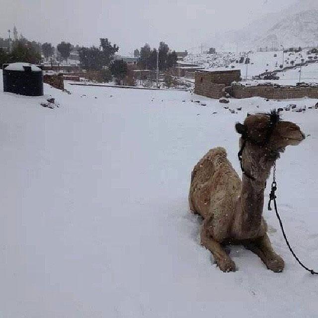 snow in cairo egypt december 2013 (2)
