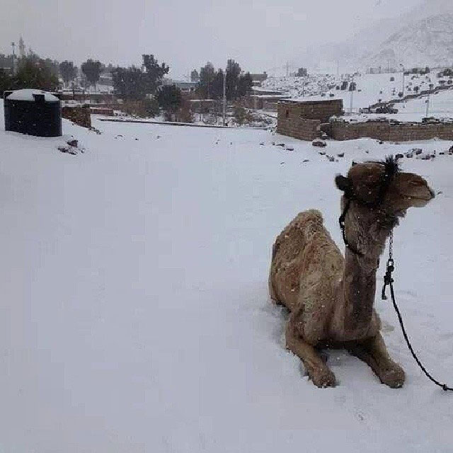 snow in cairo egypt december 2013 (2)
