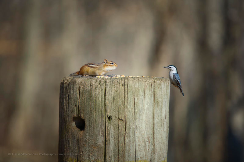 bird chipmunk meet standoff The Sifters Top 75 Pictures of the Day for 2014