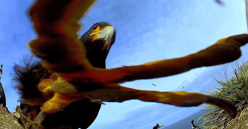 Bird Steals Camera and Proceeds to Take AmazingFootage
