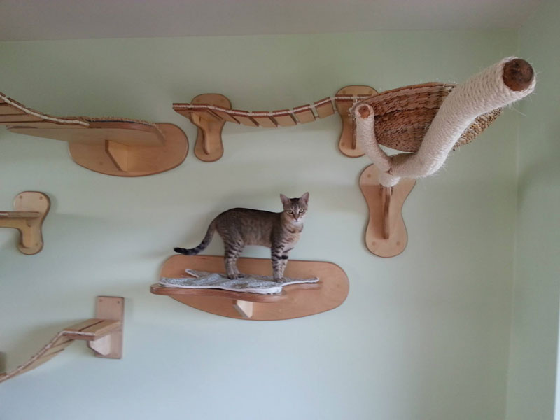 ceiling furniture for cats by goldatze gold paw (10)