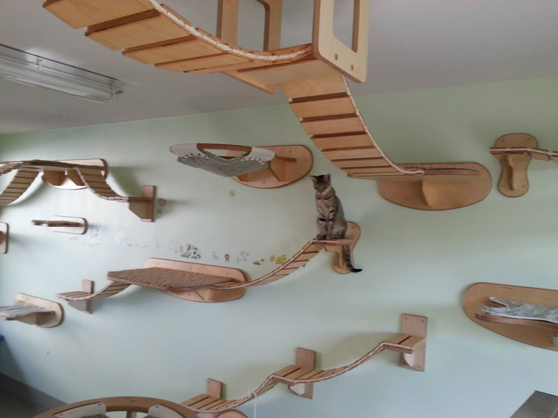 ceiling furniture for cats by goldatze gold paw (11)