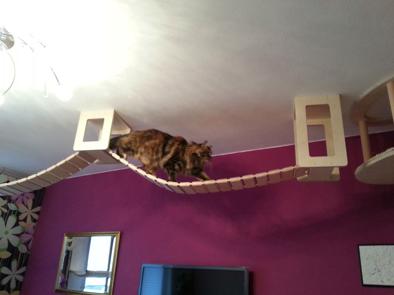 ceiling furniture for cats by goldatze gold paw (14)
