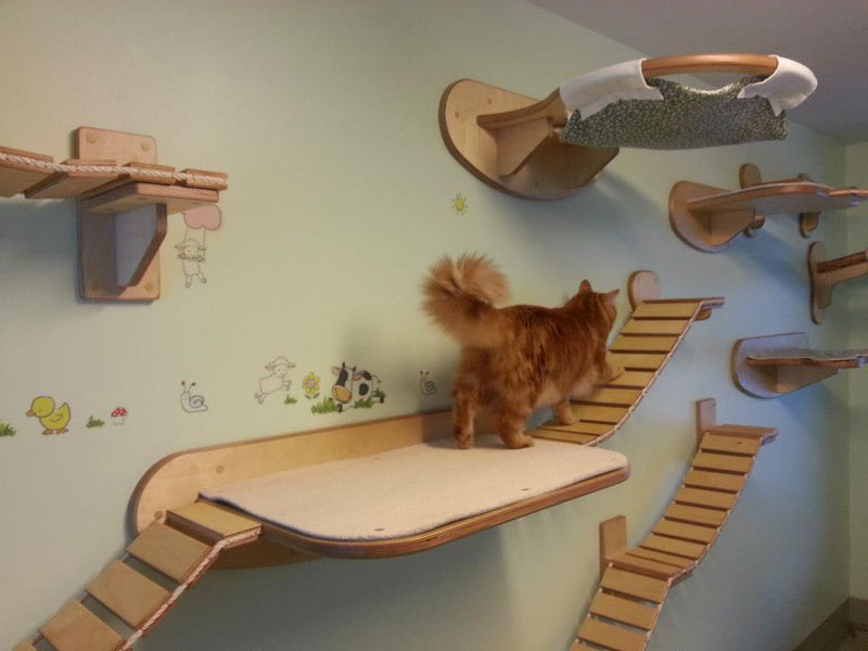 Ceiling Furniture For Cats By Goldatze Gold Paw 2