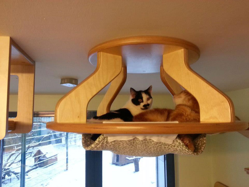 ceiling furniture for cats by goldatze gold paw 5 - Cat Jungle Gym