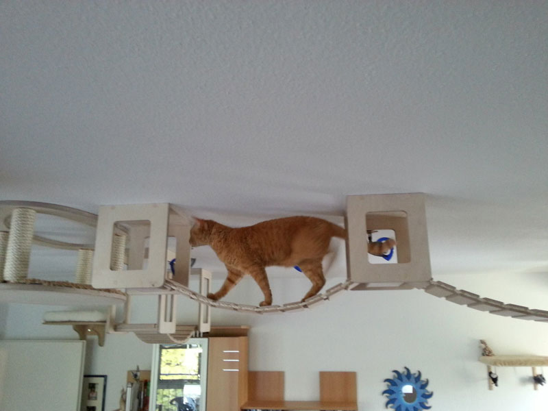 This Furniture Gives New Meaning To The Term Ceiling Cat Eye