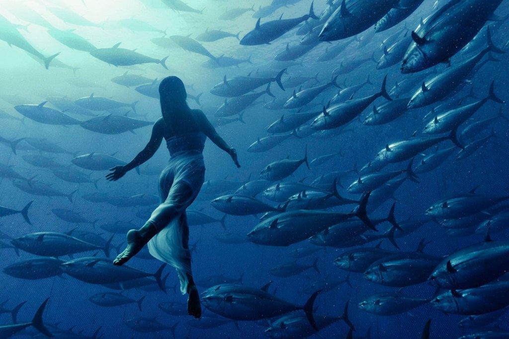 Picture of the Day: Freediving withTunas