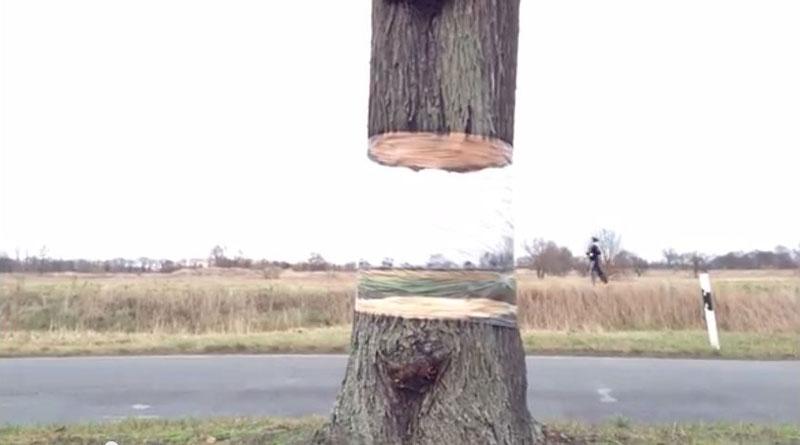 Seni Kreatif, Ilusi Pohon yang Melayang