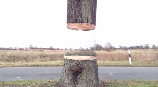 levitating tree street art illusion by daniel siering and mario shu (2)