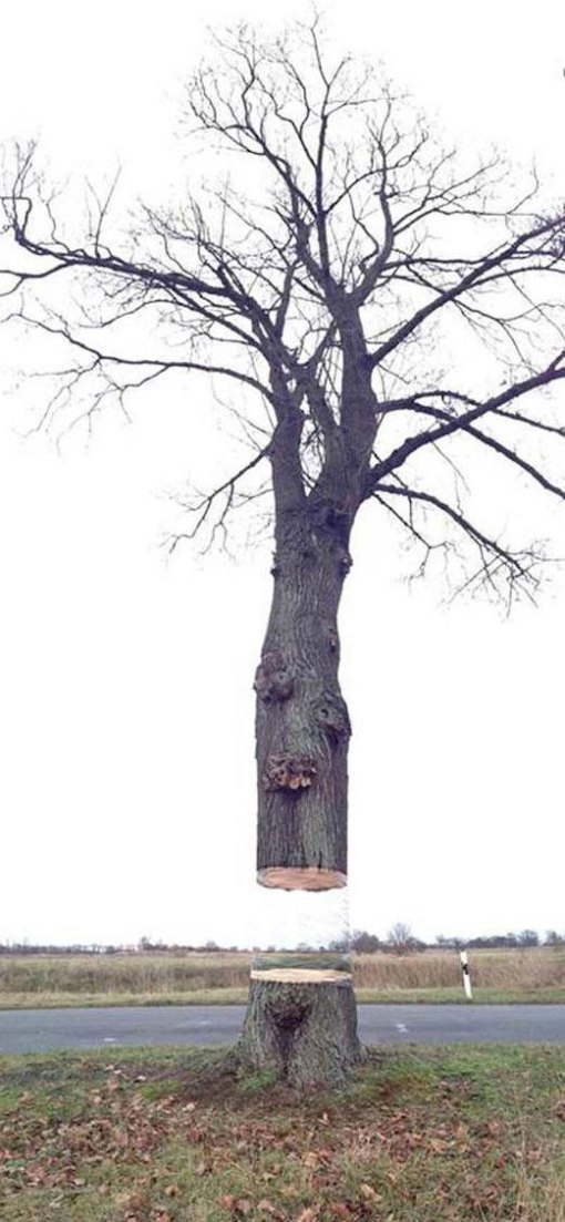 levitating tree street art illusion by daniel siering and mario shu (4)