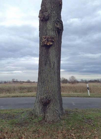 levitating tree street art illusion by daniel siering and mario shu (5)
