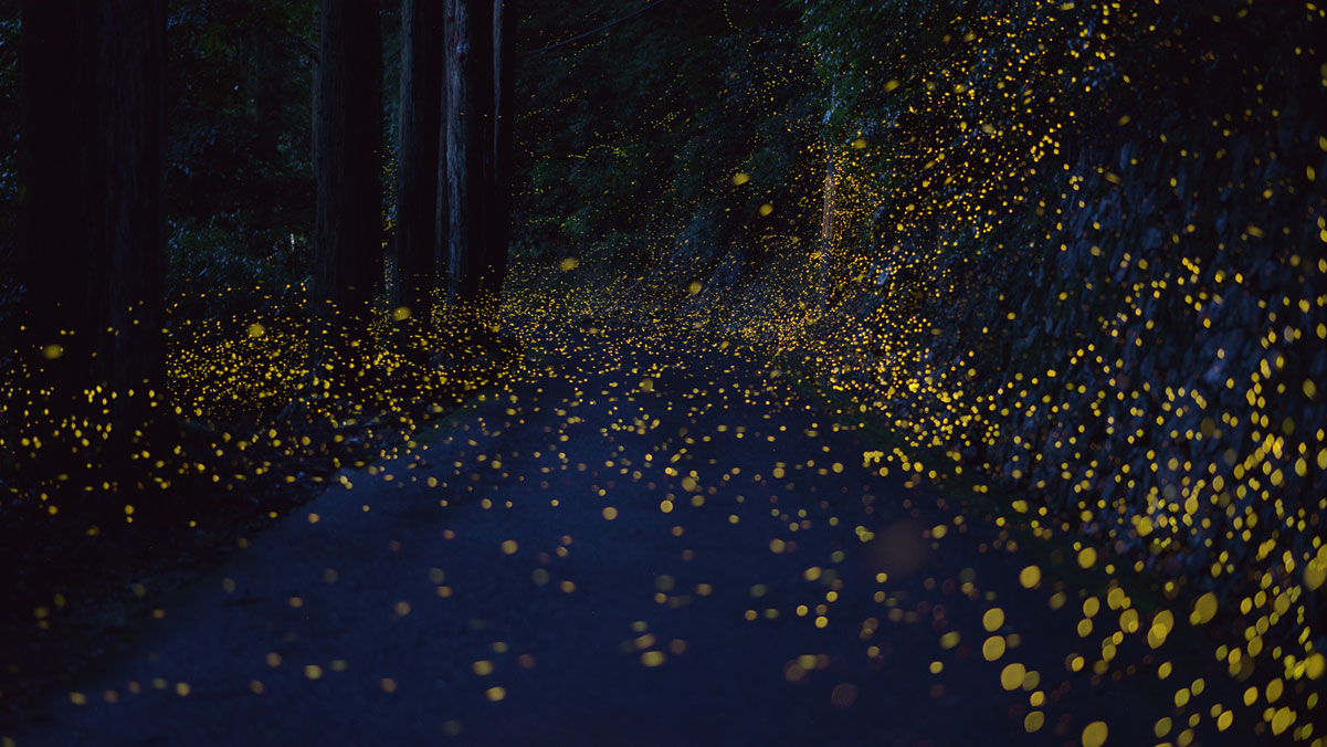 snow drone with Long Exposure Fireflies At Night In Japan Tsuneaki Hiramatsu 10 on Study Atmospheric River Storms Can Reduce Sierra Snow together with Index besides Snowball further Amherst College moreover Long Exposure Fireflies At Night In Japan Tsuneaki Hiramatsu 10.