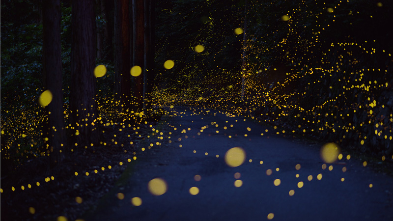 long exposure photos of fireflies at night tsuneaki hiramatsu 1 Playing with the Moon by Laurent Laveder