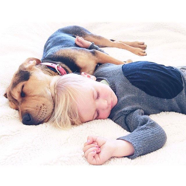 toddle naps with puppy theo and beau instagram (11)