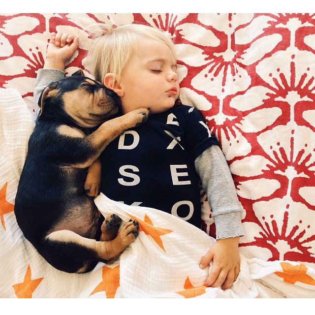 toddle naps with puppy theo and beau instagram 12 10 Reasons Why Dogs in Photo Booths is the Best Idea Ever