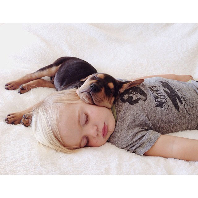 toddle naps with puppy theo and beau instagram (16)