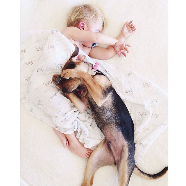 toddle naps with puppy theo and beau instagram (17)