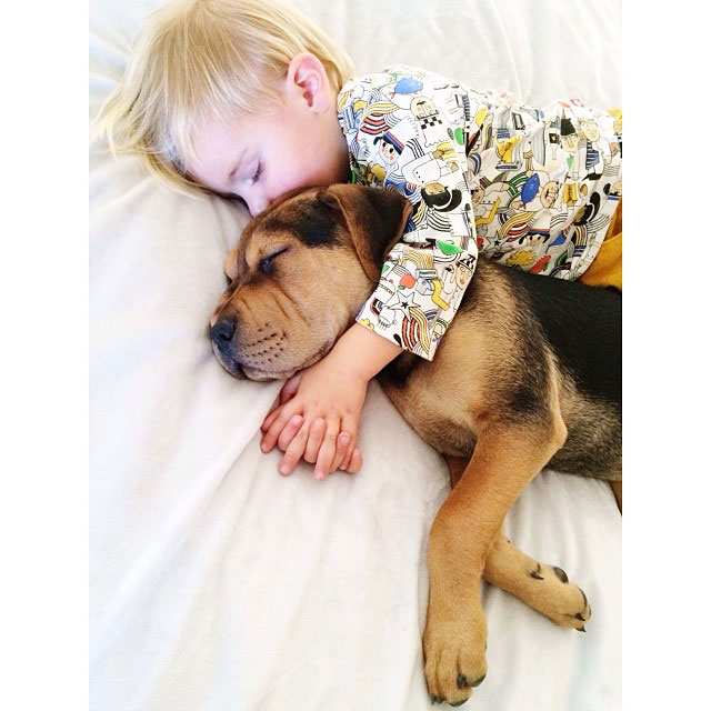 toddle naps with puppy theo and beau instagram (19)