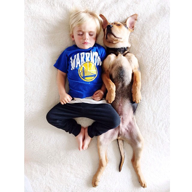 toddle naps with puppy theo and beau instagram (2)