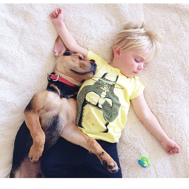 toddle naps with puppy theo and beau instagram (4)