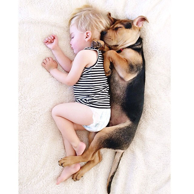 toddle naps with puppy theo and beau instagram (7)