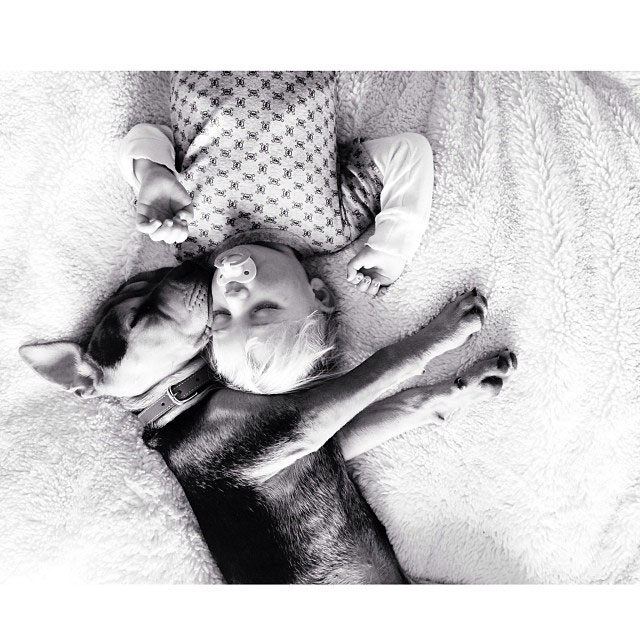 toddle naps with puppy theo and beau instagram (8)