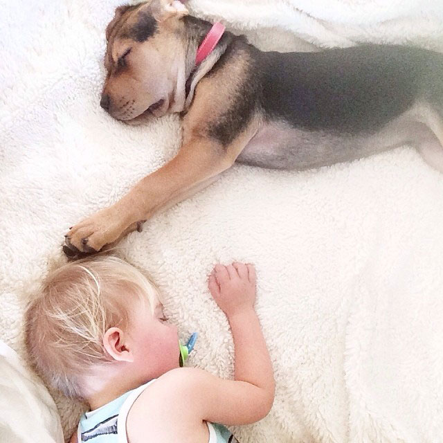 toddle naps with puppy theo and beau instagram (9)