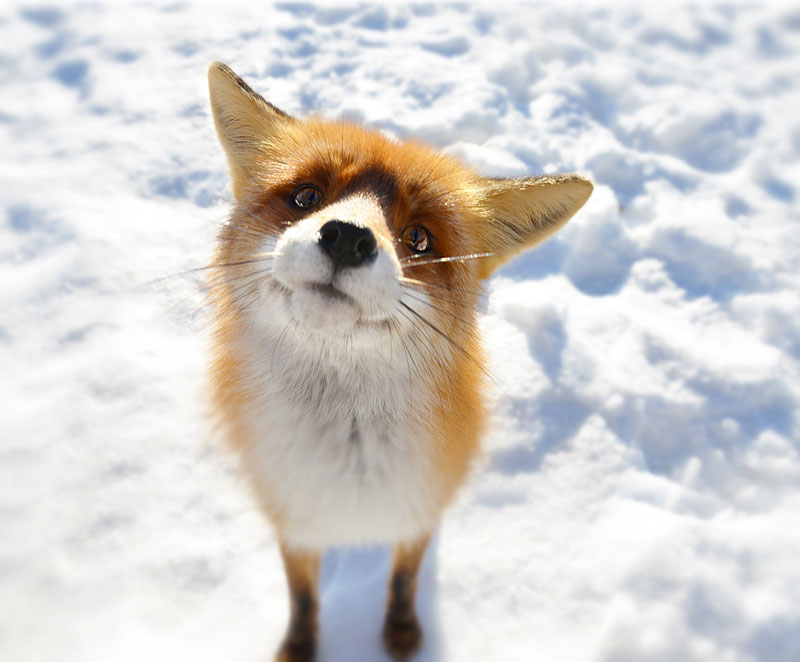 what does the fox say The Top 50 Pictures of the Day for 2014