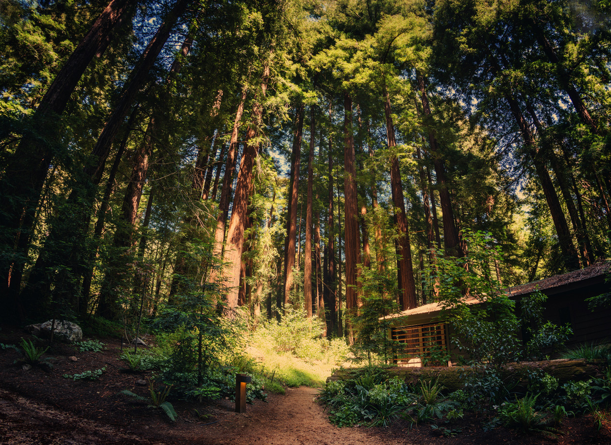 Cabin In Big Sur Surrounded By Redwoods Trey Ratcliff_test