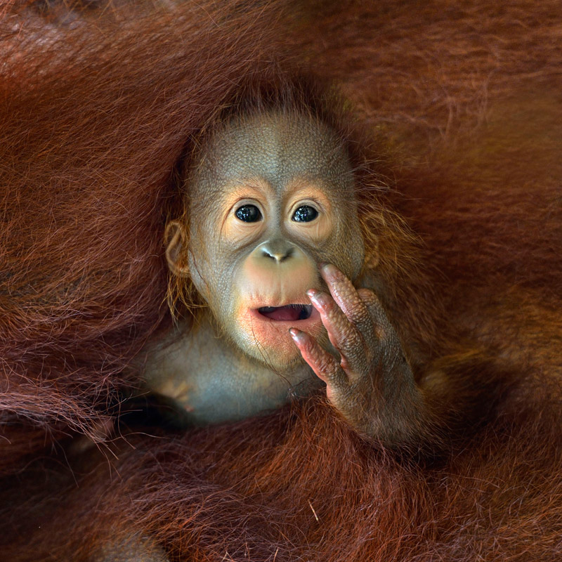 20 Highlights from the 2014 Sony World PhotographyAwards