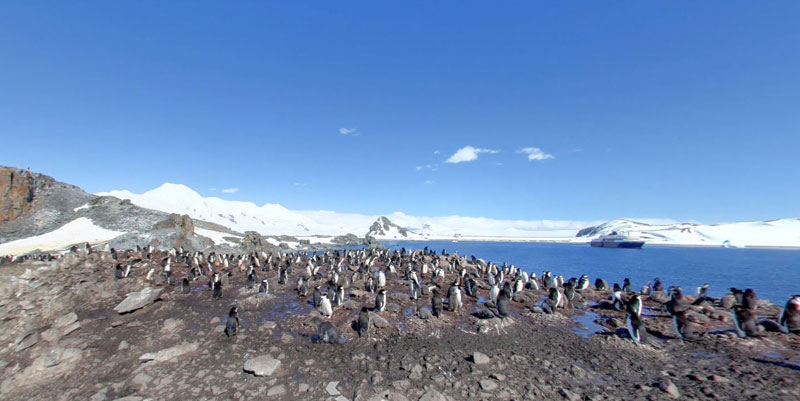 half moon island antarctica chinstrap penguins 2 Exploring Antarctica with Google Street View