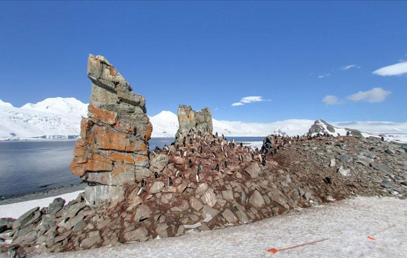 half moon island antarctica chinstrap penguins Exploring Antarctica with Google Street View