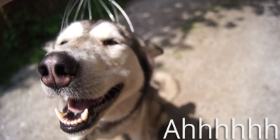 You Know Those Head Massagers? This Dog is Experiencing One for the First Time
