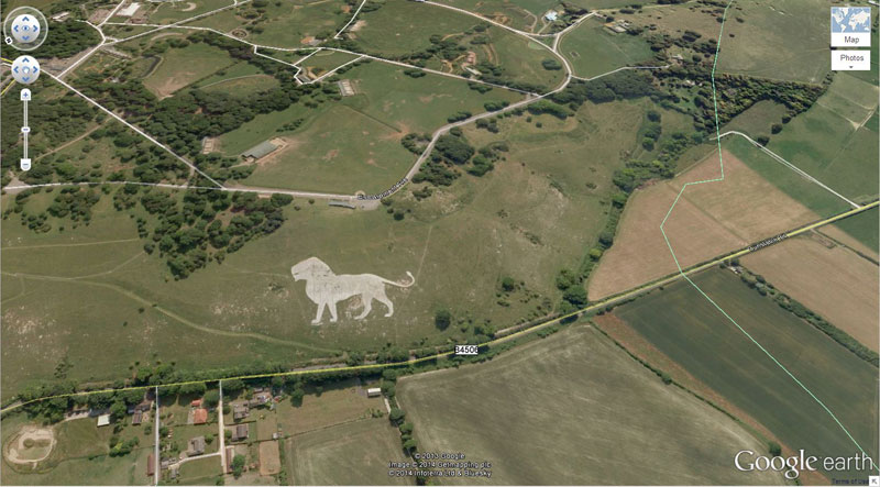 lion-google earth
