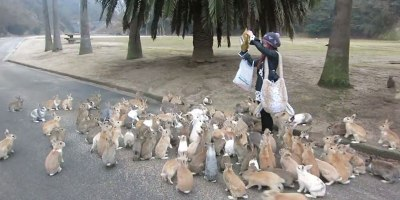 When Rabbits Take Over the World This is What it Will Look Like