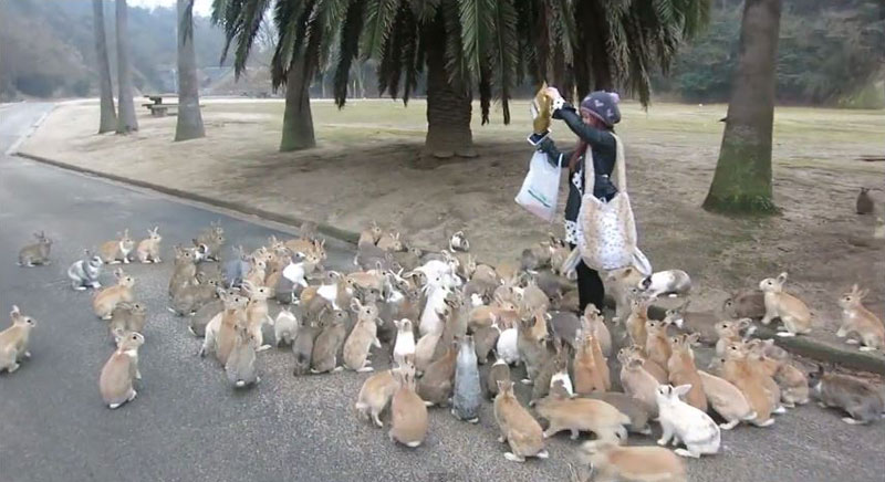 When Rabbits Take Over the World This is What it Will LookLike