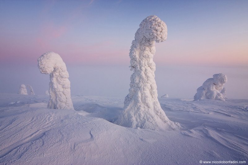 snow covered trees finnish lapland apod by niccolo bonfadini