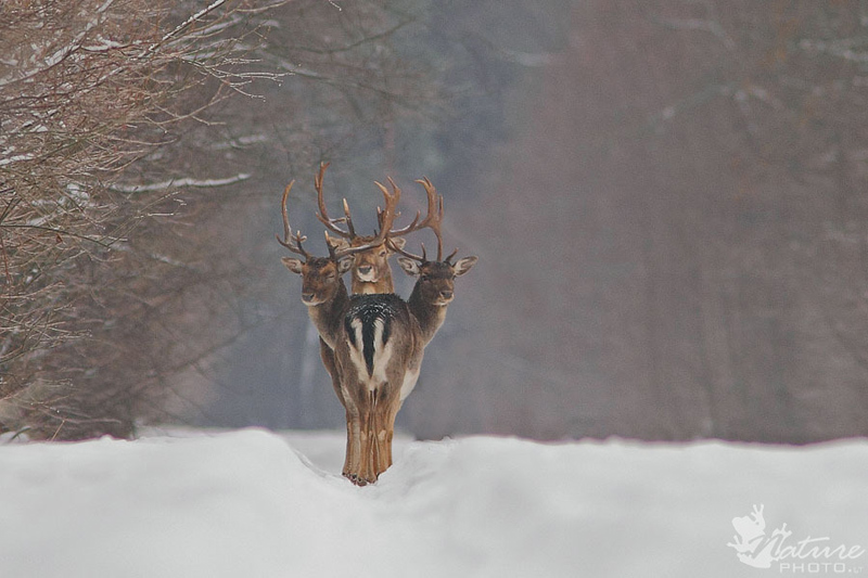 three deer perfect timing The Top 25 Pictures of the Day of 2014