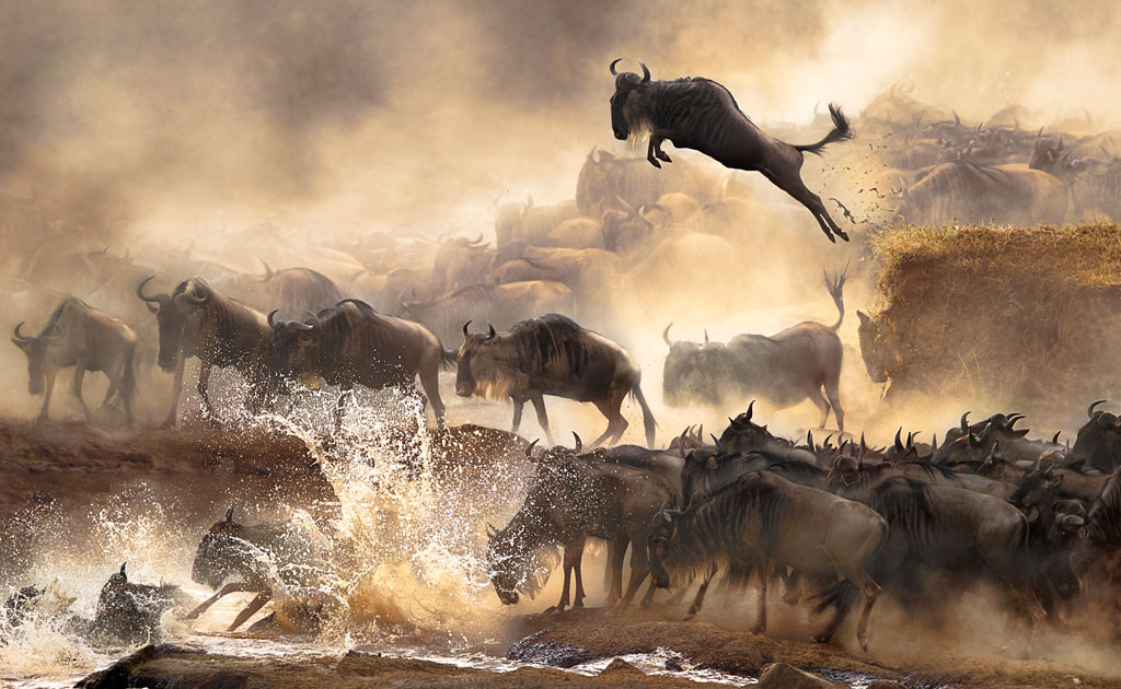 Winners Highlights from the 2014 Sony World PhotographyAwards