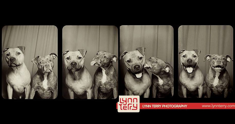 10 Reasons Why 'Dogs in Photo Booths' is the Best IdeaEver