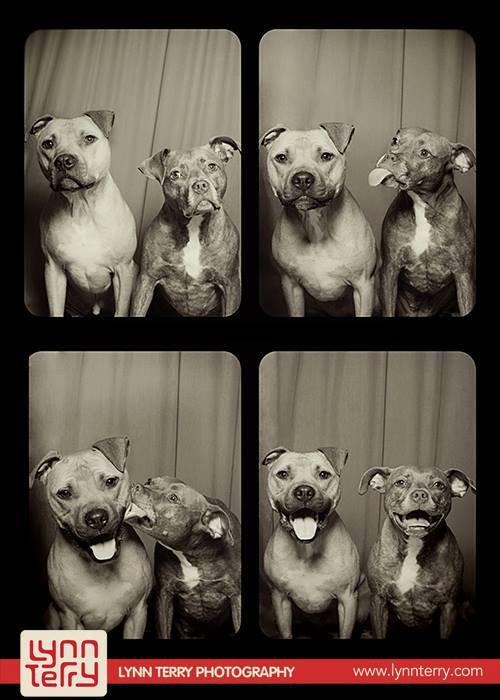 dogs in photo booths by lynn terry 11 Underwater Photos of Dogs Fetching Balls