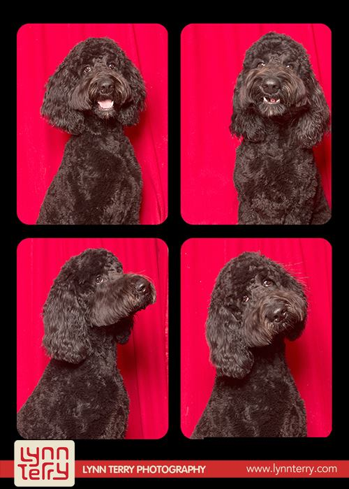 dogs in photo booths by lynn terry (2)